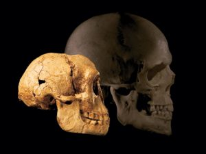 "The ""hobbit"" (left) had a much smaller head than modern humans, as seen in this comparison image."