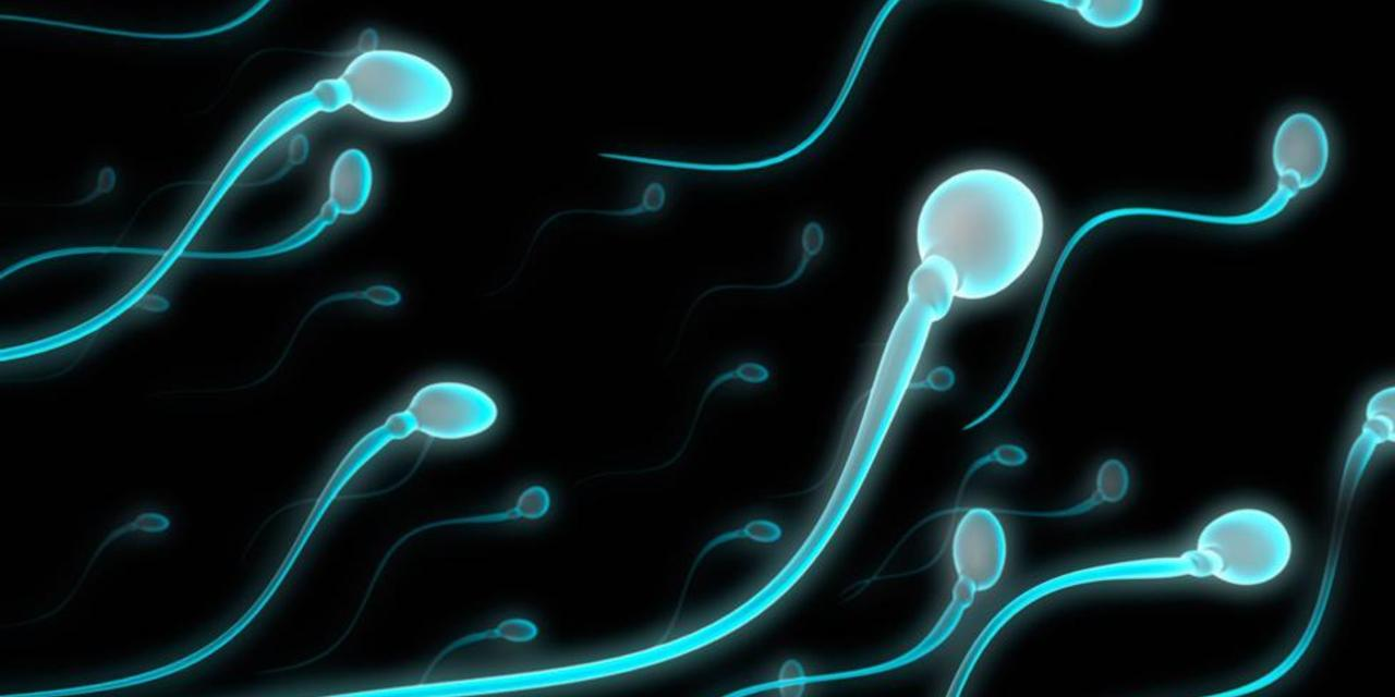 world wide drop in sperm count