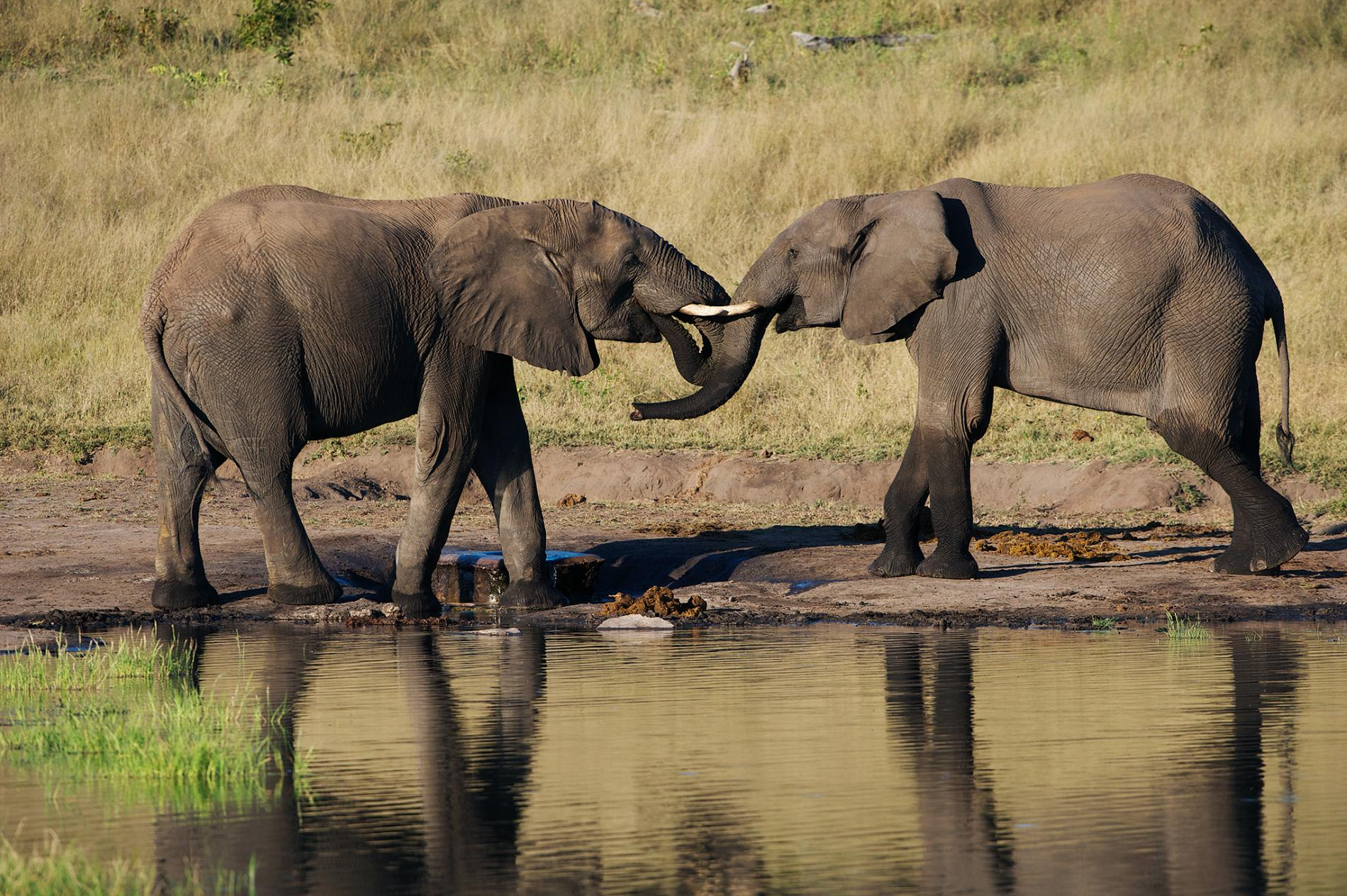 Trump pentagon nominee hunted and killed elephants in
