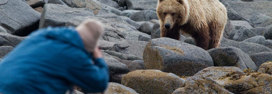 Bears Make a Comeback! How to Avoid a 'Savage'  Bear Attack!