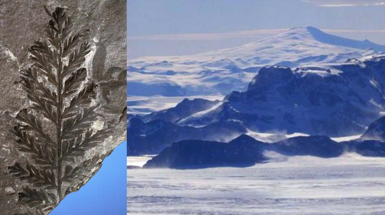 Antarctica Fores